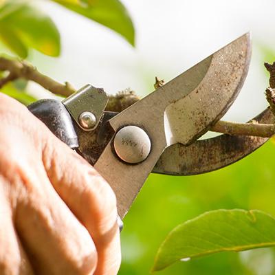 Garden-Blade-Sharpening