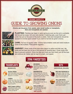 Grange Guide to Growing Onions