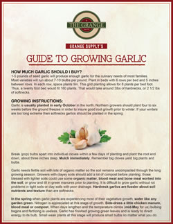 Grange Guide to Growing Garlic