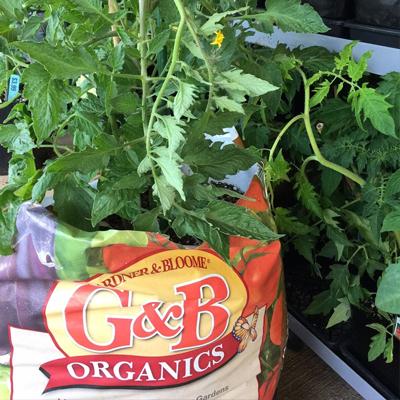 G&B Organics