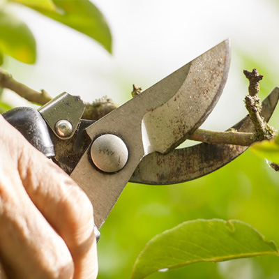 Pruning Clippers