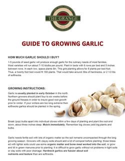 Guide to Growing Garlic